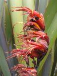 Matawai Taniwha: flowers