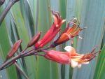 Ruahine: flowers