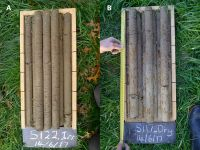 Figure 1. Soil cores from a Recent (A) and Pallic (B) Soil in the Wairarapa.