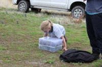 Lucy Anderson keen to see her first Jewelled Gecko contained in plastic containers before she released the first one back into the wild of Central Otago.