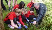 Students releasing biocontrol beetles onto tradecantia