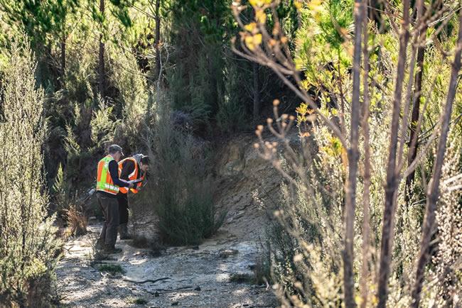 Morgan Coleman and intern Taina Goldsmith selecting manuka tree samples