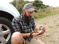 Chris Niebuhr holding a sedated stoat. Image: Pablo Garcia-Diaz
