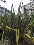Matawai Taniwha: bush