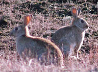 Rabbit Management Information home