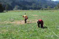 Plot in high producing grassland