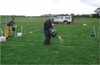 Figure 1. Cattle urine treatments being applied to field plots at Massey University Dairy Farm No.4, by Peter Berben (left) and Doug Drysdale (Royal Society-funded teacher trainee).