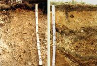 FIGURE 1 Pumice soil profiles.