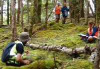 Vegetation survey underway in a New Zealand forest
