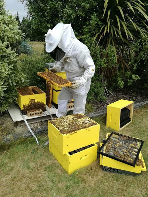 Beekeeper inspecting honey trays