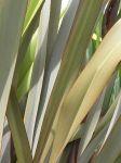Atewheke: leaves