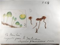 Sample record from the Kew fungarium