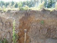 The ability of Allophanic Soils to stabilise organic matter may be utilised to maintain or even enhance soil C storage.