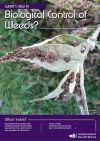 Buddleia leaf weevil. Image - Scion