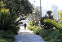 Figure 1. Rain gardens at Karanga Plaza, Auckland City intercept, retain and cleanse runoff from adjacent paved surfaces before discharge to the harbour. The rain gardens are functional landscaping using local plan.