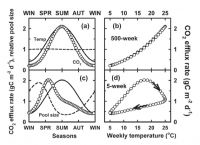 Figure 1. Simulated respiration rates (o) using a one-pool model, as a function of time (a, c) or temperature (b, d) for recalcitrant (a, b) or labile organic matter (c, d), with turn-over times given in the Figure. The dashed lines in (a, c) show changes in relative pool sizes, and solid lines show relative temperature.