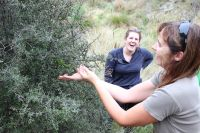Central Otago Ecological Trust volunteer, Rachel Baxter, releases a Jewelled gecko, with Australian visitor, Jess Masson enjoying her reaction.