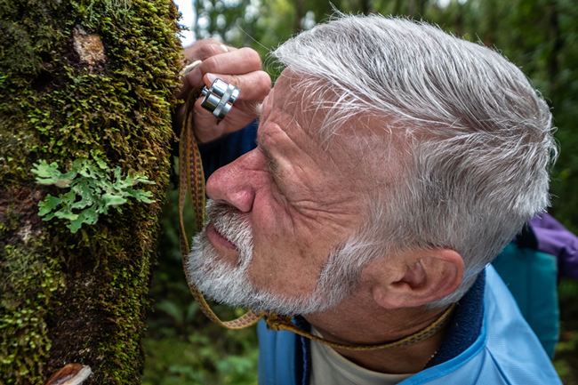 Dr Peter Buchanan examining a specimen of Fomes hemitephrus