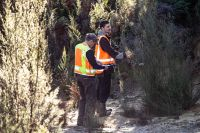 Morgan Coleman and Taina Ngarimu-Goldsmith searching for tagged mānuka
