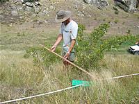 Measuring shrub density.