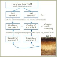 Figure 1. Outline of procedure for evaluating soil natural capital (SNC) for a specified soil and land use type.