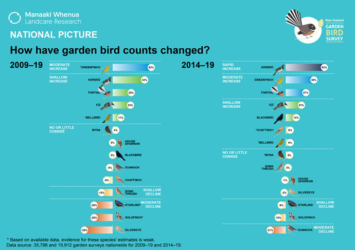 NZ's national picture: How have garden bird counts changed?