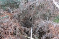 Plot tapes in gorse