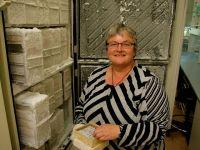 Dr Janine Duckworth of Landcare Research handling rabbit DNA samples.
