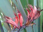 Raumoa: flowers