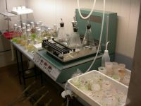 Cultures of algae, including liquid cultures (in flasks) and agar plates (bottom right).