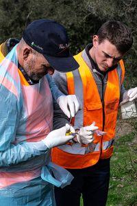 Manaaki Whenua staff undertaking monitoring work
