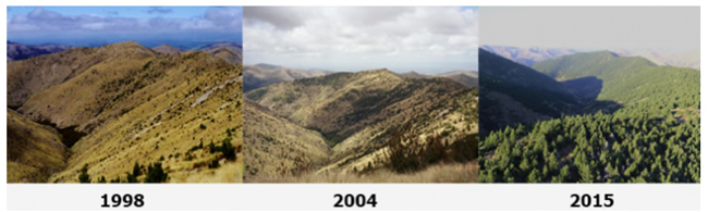 Images showing how wilding conifers can spread if left unchecked - Mid Dome, Upper Tomogalak, from 1998 to 2015. Image: Richard Bowman, MPI