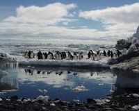 Penguins on fast ice. Image - Kerry Barton