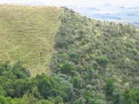 Grazed pasture in South Canterbury. R: Site that has not been grazed for 30 years