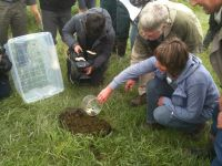 Releasing dung beetles at a dairy farm