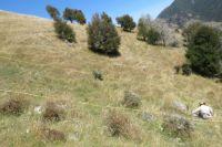 Plot-based plant survey in Wairau Valley.