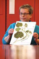Allan Herbarium manager Ines Schonberger with a velvetleaf specimen.