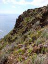 Surville Cliffs, North Cape (Peter de Lange)