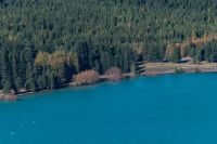 Wilding conifers spreading along the shore of Lake Tekapo