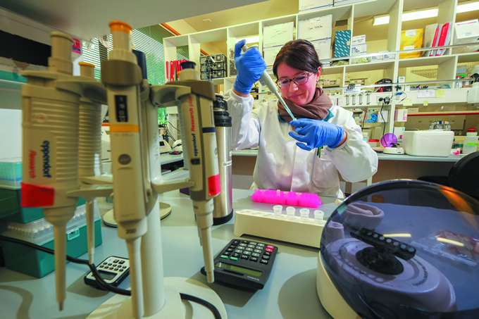 Lab technician Caroline Mitchell works in the Lincoln GEM lab to extract DNA from mānuka