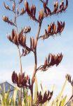 Tāpoto: seed pods