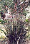 Taniwha: bush