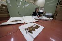 Checking specimen information