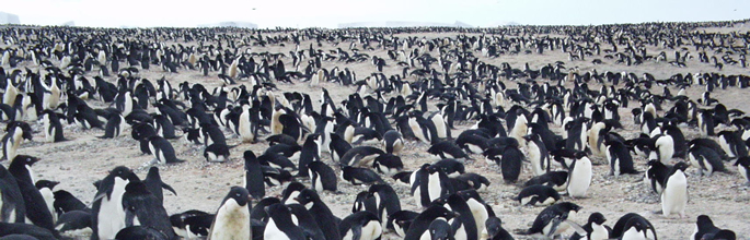 Cape Adare. Image - Kerry Barton