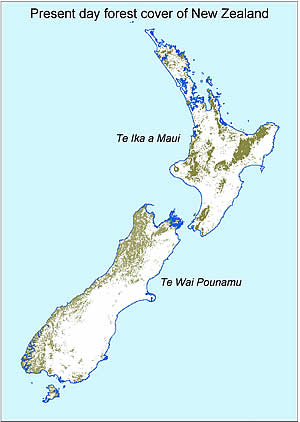 Present day forest cover of New Zealand.