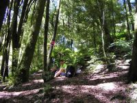 Central North Island Forest – Ivor Yockney hard at work. Image - Wendy Ruscoe