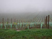 Vineyard. Image - John Hunt