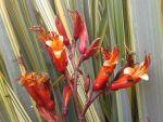 Parekoritawa: flowers