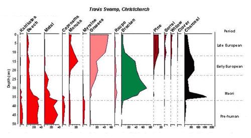 Pollen diagram for Travis Swamp, Christchurch.