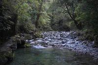 Creek in Wairau Valley